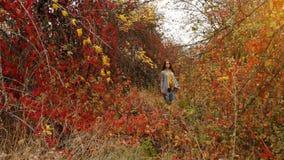 Mulher gravida que anda no parque do outono vídeos de arquivo