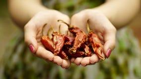 Mulher guardando pimentas vermelhas secadas Fotografia de Stock