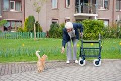Mulher idosa com caminhante e gato Fotos de Stock Royalty Free