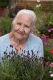 Mulher idosa que guarda a alfazema Imagem de Stock