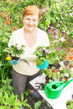 Mulher idosa superior ativa do jardineiro com os potenciômetros das flores Imagens de Stock Royalty Free