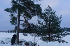 A mulher inclinou-se contra o pinheiro e admira a beleza do Golfo da Finlândia VYBORG, RÚSSIA 05 01 2019 Parque-como imagens de stock royalty free