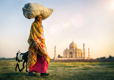 Mulher indiana que continua a cabra principal Taj Mahal Concept fotos de stock