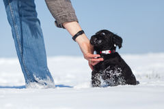 Mulher com um filhote de cachorro na neve Fotografia de Stock
