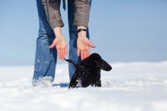 Mulher e filhote de cachorro na neve Fotos de Stock