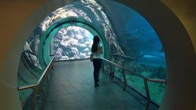 a mulher 4k anda no túnel e nos olhares do aquário através do vidro como a nadada dos peixes filme