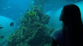 a mulher 4k anda no túnel e nos olhares do aquário através do vidro como a nadada dos peixes video estoque