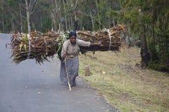 A mulher leva a lenha Imagem de Stock