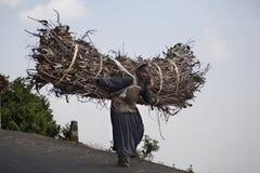 A mulher leva a lenha Fotografia de Stock Royalty Free