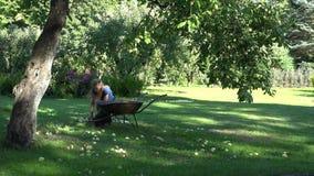 A mulher leva-lhe frutos de colheita do carrinho de mão e do recolhimento sob a árvore de maçã 4K video estoque
