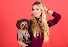 A mulher leva o yorkshire terrier Certifique-se que o cão sente confortável na roupa fato e acessórios Vestindo o cão para o frio foto de stock royalty free