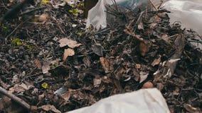 A mulher limpa as folhas velhas secas no jardim vídeos de arquivo