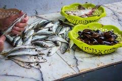 A mulher limpa um peixe pequeno Fotos de Stock Royalty Free