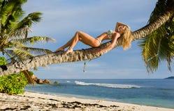 A mulher loura bonita 'sexy' coloca no tronco da palmeira Fotos de Stock Royalty Free