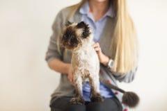 Mulher loura com sua Cat Extreme persa Fotos de Stock