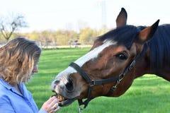 A mulher loura dá o alimento a seu cavalo imagem de stock royalty free