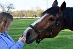 A mulher loura dá o alimento a seu cavalo foto de stock royalty free