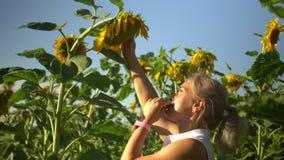 A mulher loura feliz bonita come sementes de girassol no campo do verão dos girassóis video estoque
