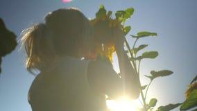 A mulher loura feliz bonita toca e aspira no girassol no campo do verão dos girassóis video estoque