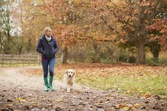 Mulher madura em Autumn Walk With Labrador fotos de stock royalty free