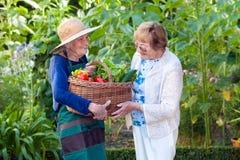 Mulher madura que ajuda um jardineiro superior com cesta foto de stock