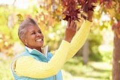 Mulher madura que relaxa em Autumn Landscape Imagem de Stock Royalty Free