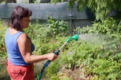A mulher molha um jardim Fotos de Stock