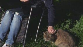 Mulher na cadeira com portátil e o gato cinzento video estoque