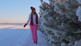 A mulher na camiseta anda no inverno da neve, mão tocante uma árvore com Frost filme