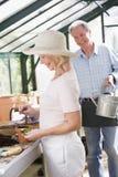 Mulher na estufa que planta sementes e homem Fotografia de Stock Royalty Free