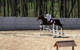 Mulher na mostra do cavalo que salta na arena especial Fotos de Stock Royalty Free