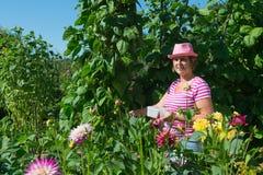 Mulher no jardim vegetal Foto de Stock