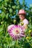 Mulher no jardim vegetal Imagens de Stock Royalty Free