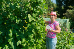 Mulher no jardim vegetal Foto de Stock Royalty Free