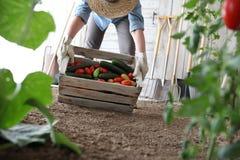 Mulher no jardim vegetal que guarda a caixa de madeira com vegetal da exploração agrícola imagem de stock royalty free
