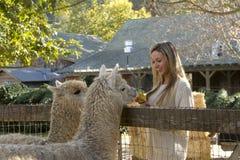 Mulher no jardim zoológico de trocas de carícias Foto de Stock