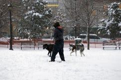 Mulher no parque com seus dois cães durante a queda da neve no Bronx Imagem de Stock Royalty Free