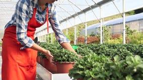 Mulher no trabalho na estufa com pulverizador, plantas do cuidado filme