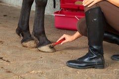 Mulher nova com seu cavalo fotos de stock royalty free
