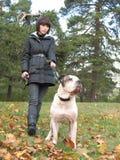 Mulher nova e cão forte fotografia de stock