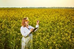 Mulher ou fazendeiro do agrônomo para examinar o campo de florescência do canola da violação usando a tabuleta fotografia de stock