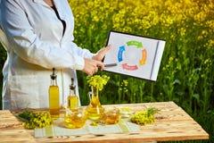 Mulher ou fazendeiro do agrônomo para examinar o campo de florescência do canola da violação usando a tabuleta com infographic foto de stock royalty free