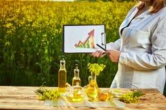 Mulher ou fazendeiro do agrônomo para examinar o campo de florescência do canola da violação usando a tabuleta com infographic fotos de stock