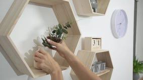 A mulher põe a decoração e as flores sobre as prateleiras na parede vídeos de arquivo