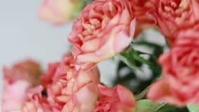 A mulher põe-no ramalhete alaranjado cor-de-rosa das rosas sobre a tabela de madeira Feriados easter, dia de mães, Valentim, fund video estoque