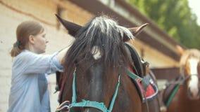 A mulher põe sobre uma sela sobre o cavalo na exploração agrícola animal vídeos de arquivo
