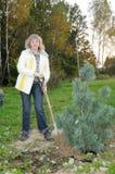 A mulher planta árvores em um jardim Imagens de Stock Royalty Free