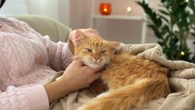 Mulher que afaga o gato de gato malhado vermelho na cama em casa video estoque