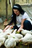 Mulher que alimenta a exploração agrícola de galinha grande imagens de stock