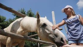 Mulher que alimenta o cavalo cinzento outdoors video estoque